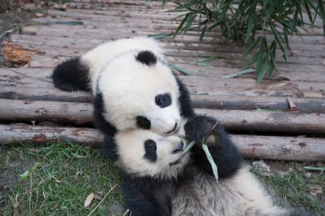 Pandas-7